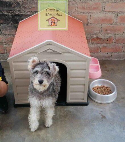 Casa-para-Mascotas-1